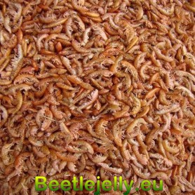 Fresh Dried Premium Gammarus Schrimps 3L