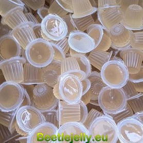 Beetle Jelly Case 16g Honey