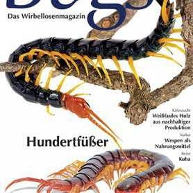 Bugs Magazine nr.8 - Hundertfüsser