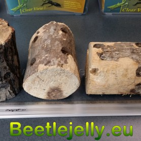 Insect breeding wood Large