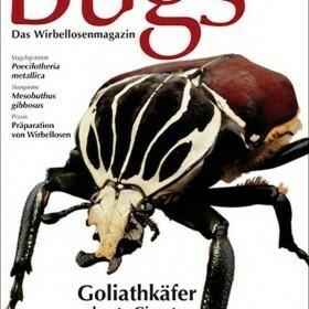 Bugs Magazine nr.1 - Goliathkäfer bunte Giganten