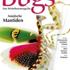 Bugs Magazine nr.6 - Asiatische Mantiden