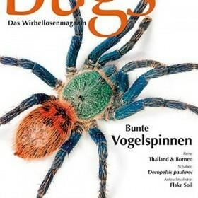 Bugs Magazine nr.7 - Bunte Vogelspinnen
